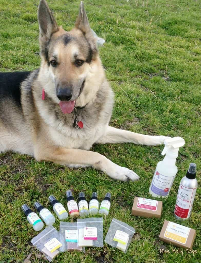 Wondercide Natural Pet Care Products Keep my Dogs Clean, Comfortable and Creepy-Crawly-Critter Free!