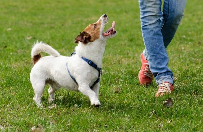 dog walking exercise