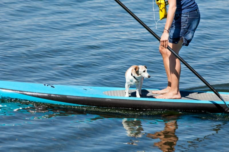 water sports with dog