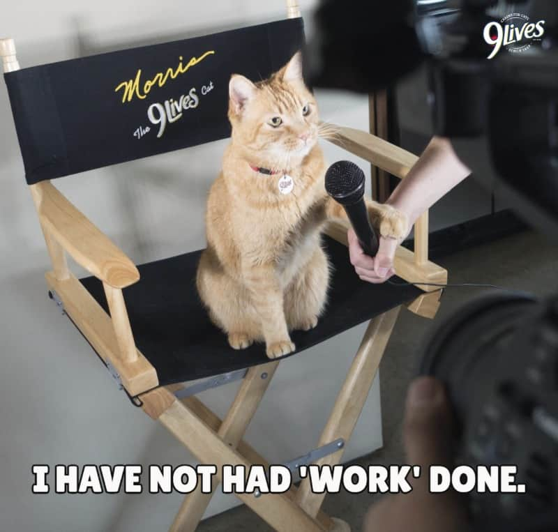Morris the Cat from 9Lives Shares Grooming Tips for Cats!