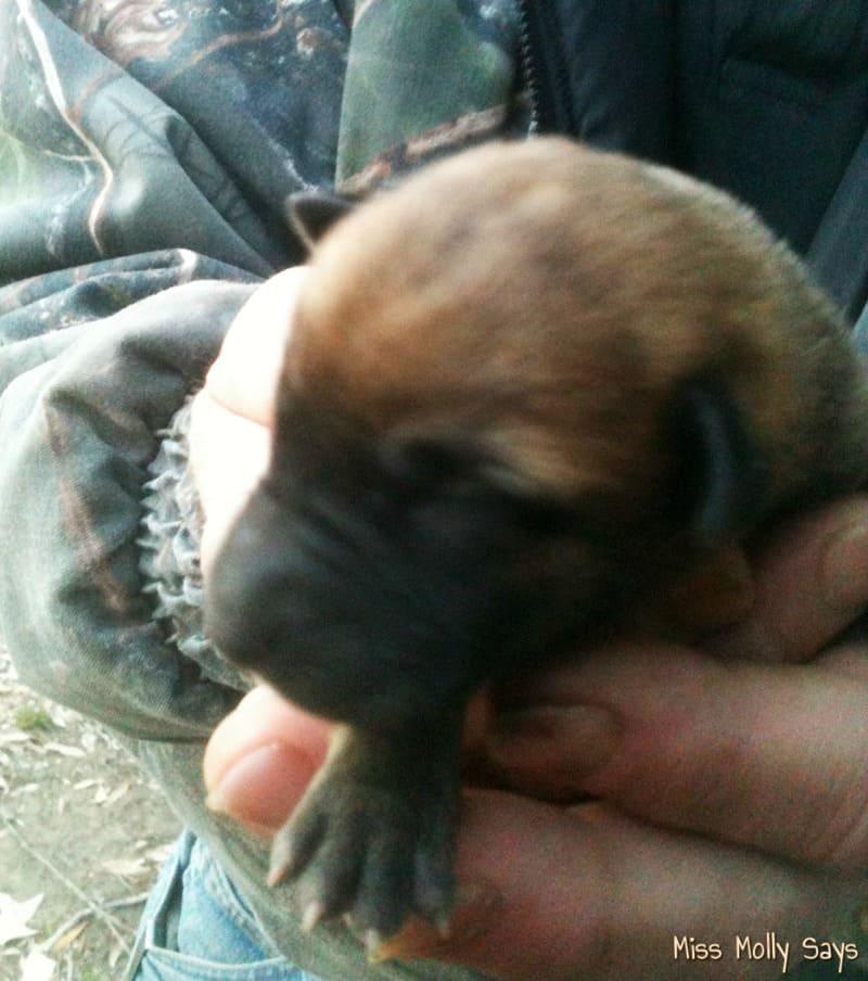 How to Raise Orphaned Puppies - Brandi