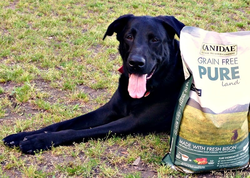 CANIDAE® Grain-Free PURE Dog Food for a Healthy Happy Dog! #HealthyPetHappyPet