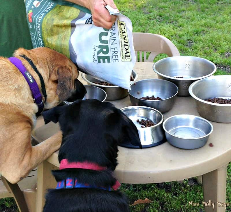 CANIDAE® Grain-Free PURE Dog Food for a Healthy Happy Dog! #HealthyPetHappyPet - filling dog food bowls