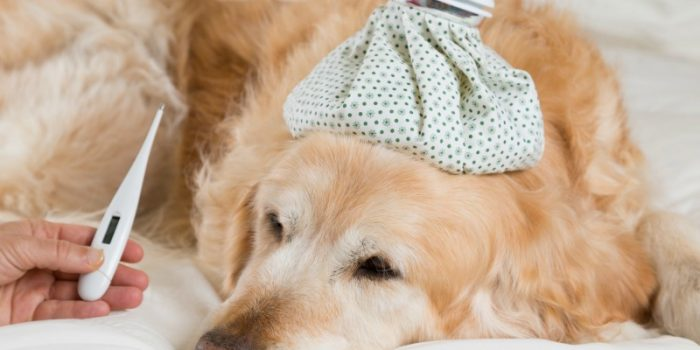 Can You Catch Illnesses From Your Pet, and Vice Versa?