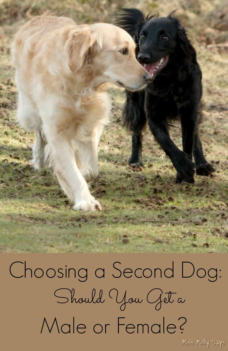 Choosing a Second Dog - Should You Get a Male or Female