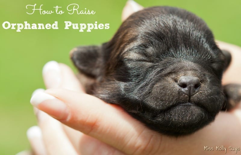 How to Raise Orphaned Puppies