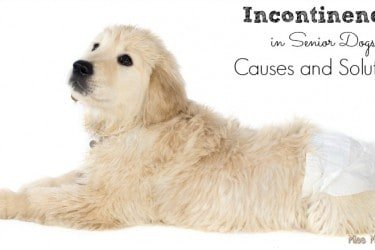 Incontinence in Senior Dogs - Causes and Solutions