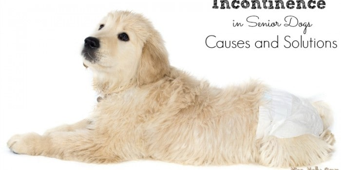 Incontinence in Senior Dogs | Causes and Solutions