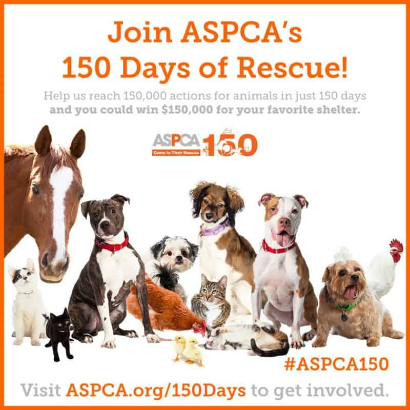 Join ASPCA's 150 Days of Rescue