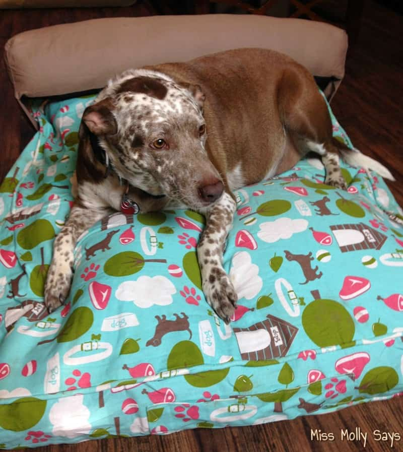 Molly Mutt Dog Bed Duvet: The Eco-Friendly Bed Your Dog Will Love!