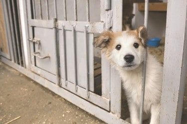 The Benefits of Adopting a Shelter Pet