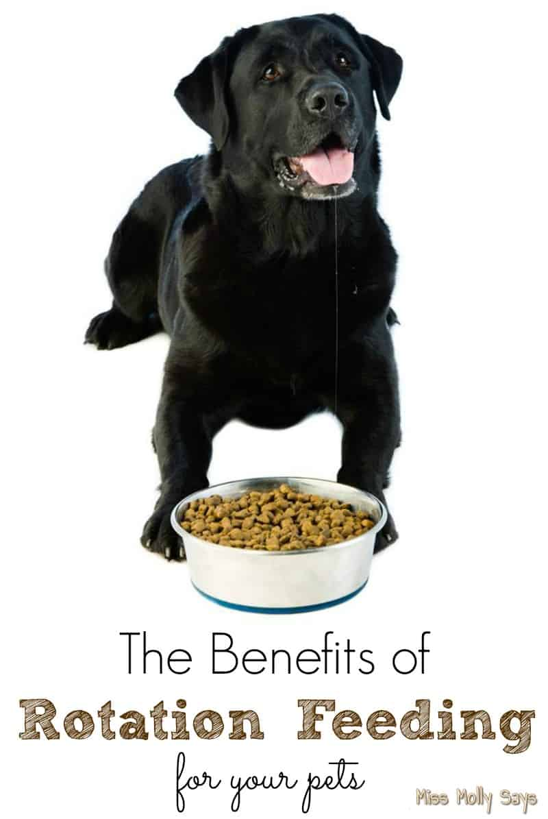 The Benefits of Rotation Feeding for Your Pets