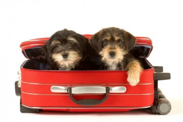 Traveling With Your Pet - 5 Things You Need to Know