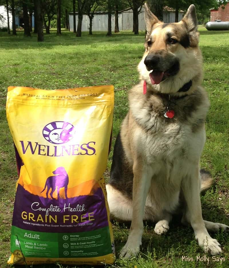 Wellness Complete Health Grain-Free Dog Food for Complete Well-Being