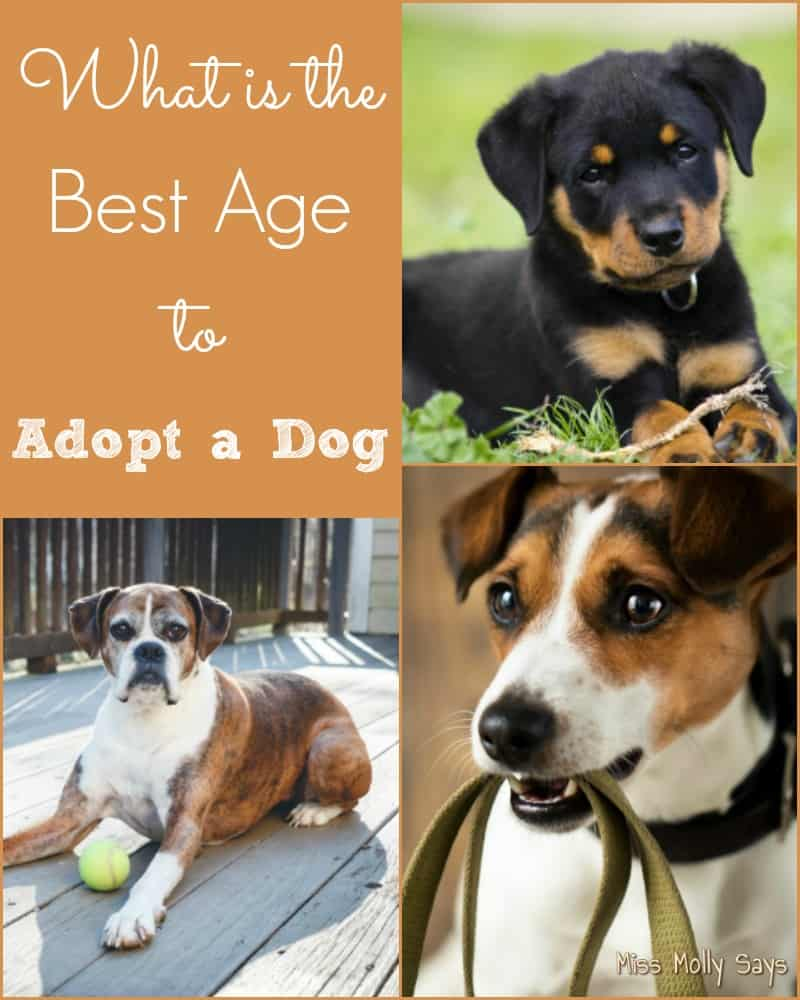 What is the Best Age to Adopt a Dog