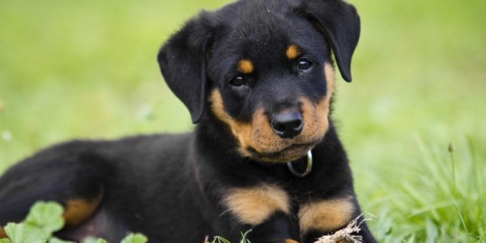 What is the Best Age to Adopt a Dog?