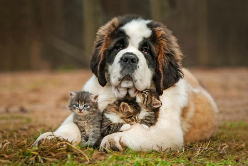 dog-and-kitties