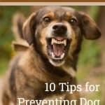 10 Tips for Preventing Dog Bites