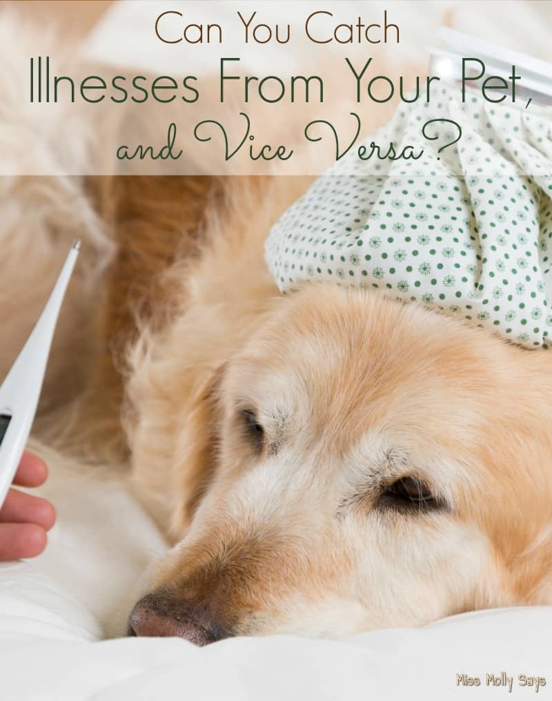 Can You Catch Illnesses From Your Pet, and Vice Versa