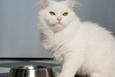 Cat Food – Wet vs Dry