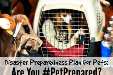 Disaster Preparedness Plan for Pets: Are you #PetPrepared?