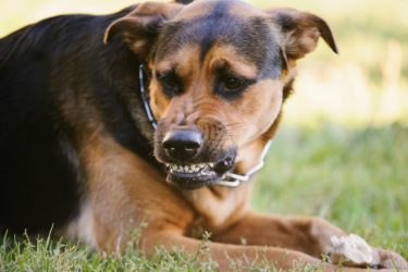 Dog Bite Prevention: From a Dog's Perspective