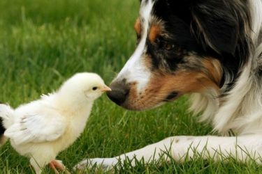 Farm Pups How to Best Take Care Of Your Dog