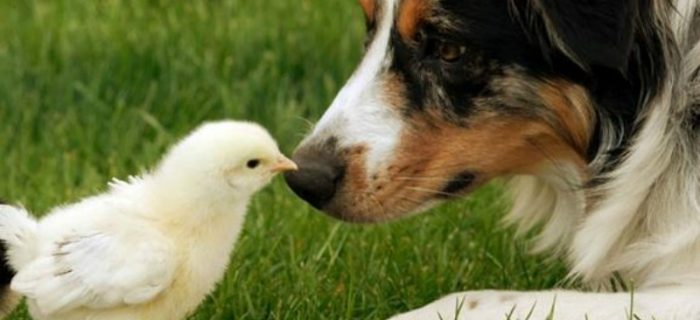 Farm Pups: How to Best Take Care Of Your Dog