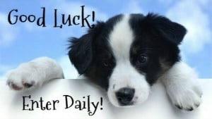 Good Luck - Enter Daily - Dog