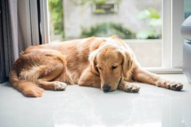 How to Know When It's Time to Put Your Pet to Sleep