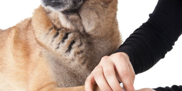 How to Prepare a Pet Emergency Kit