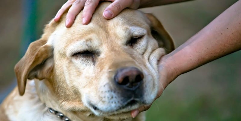 Pamper Your Pet - How To Spoil Your Dog Without Going Overboard