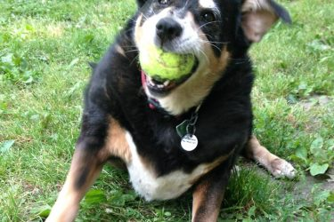 The Benefits of Adopting a Senior Dog
