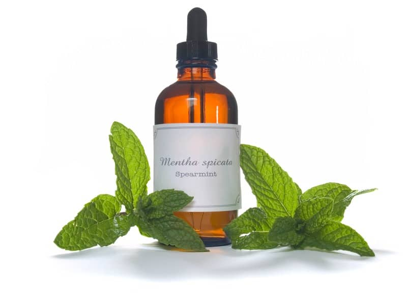 The Benefits Of Essential Oils For Dogs - Spearmint