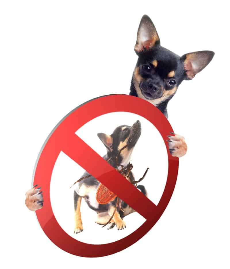The Benefits Of Essential Oils For Dogs - flea and tick treatment