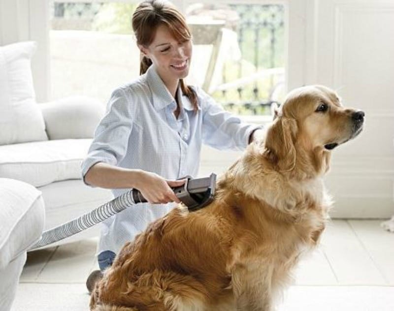 Tricks to Clear Your House of Pet Dander for Good