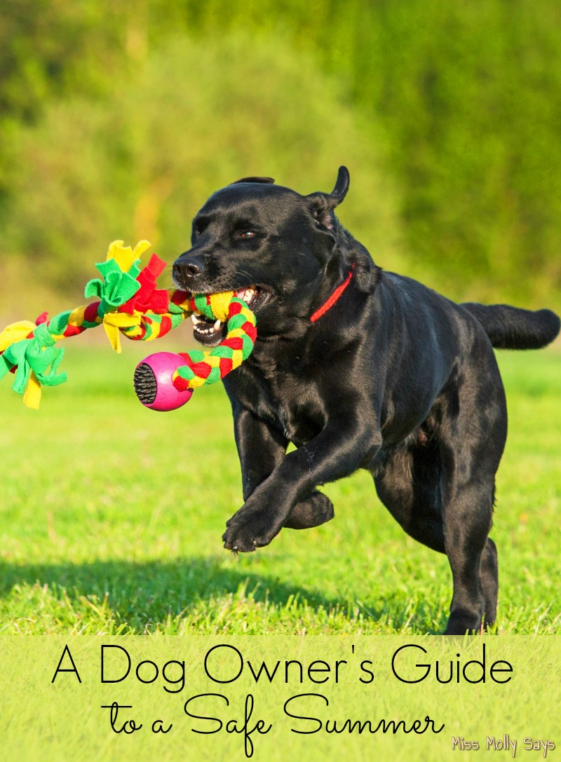 A Dog Owner's Guide to a Safe Summer