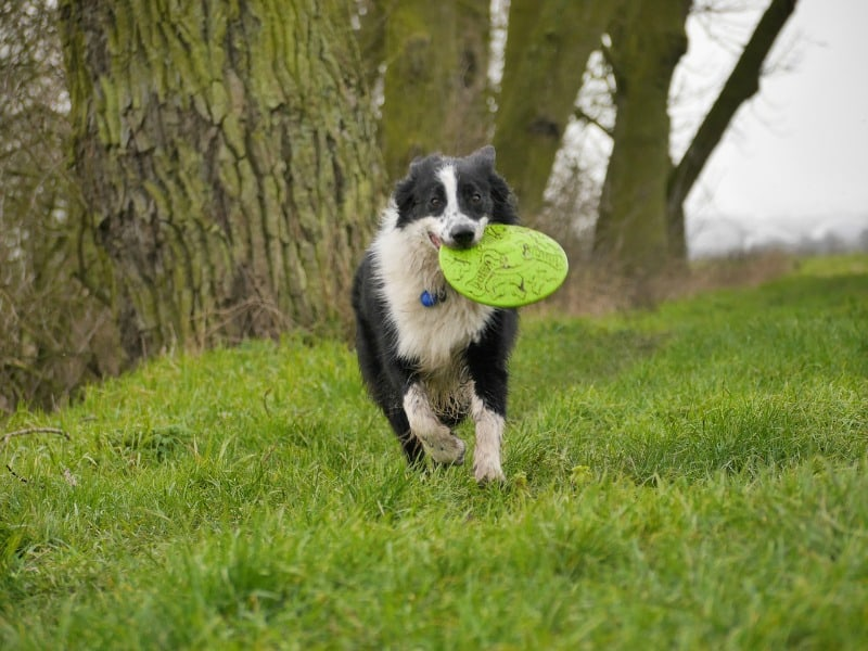 Great Activities You Can Do with Your Dog