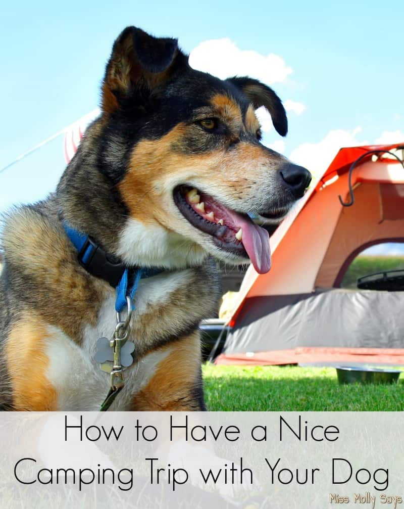 How to Have a Nice Camping Trip with Your Dog