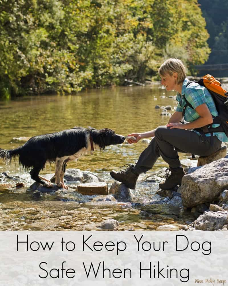 How to Keep Your Dog Safe When Hiking