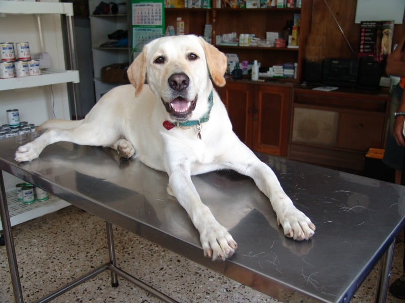 Incontinence In Young Dogs Causes And How To Deal With