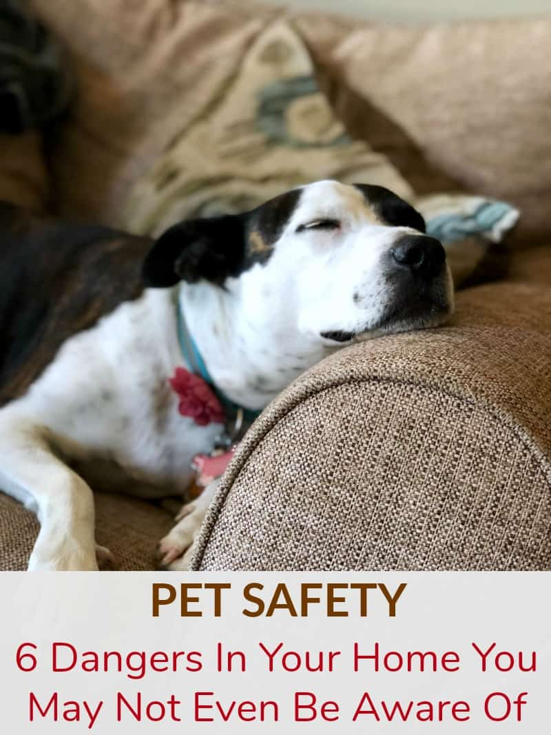 Pet Safety: Six Dangers In Your Home You May Not Even Be Aware Of