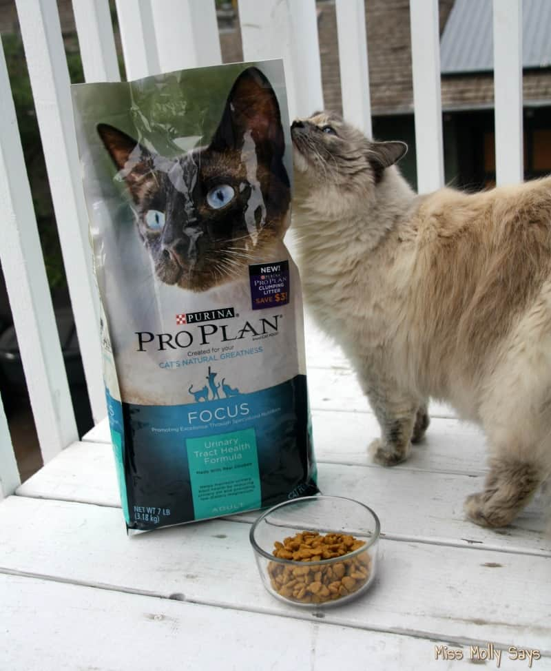 Purina Pro Plan Cat Food Fuels our Great Cat Adventure #MyGreatCat