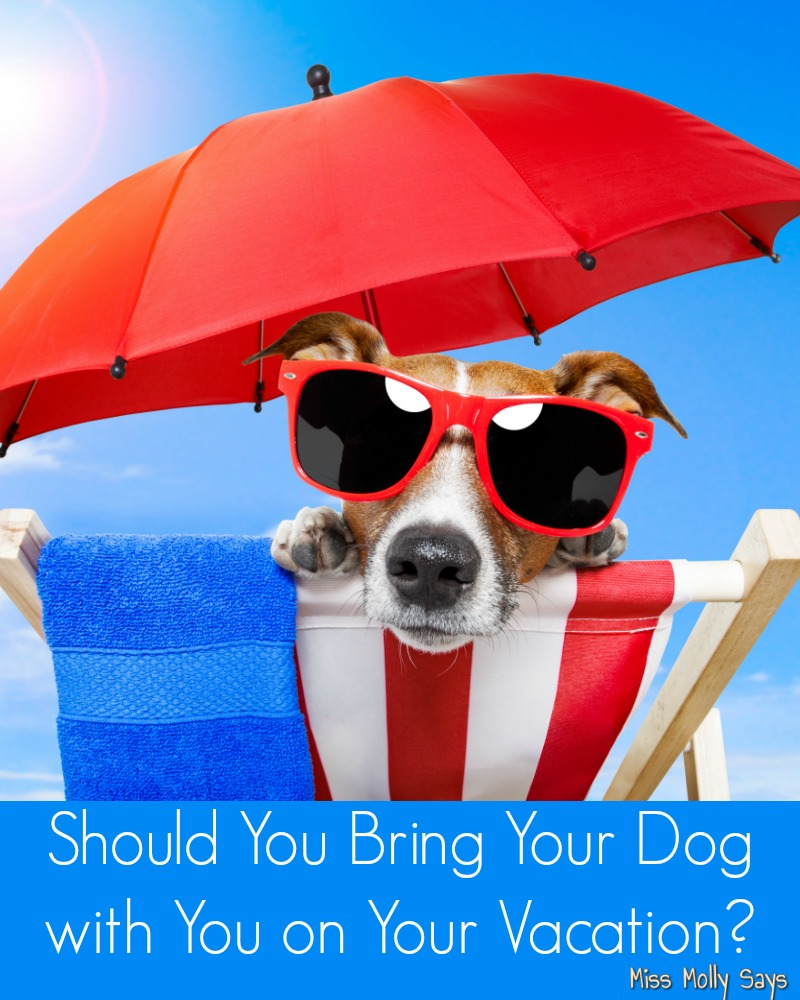 Should You Bring Your Dog with You on Your Vacation banner