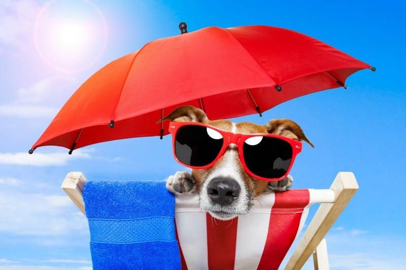 Should You Bring Your Dog with You on Your Vacation?