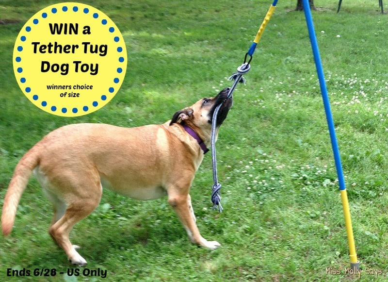 #Win a Tether Tug Interactive Dog Toy in choice of size! - ends 6/28 US Only