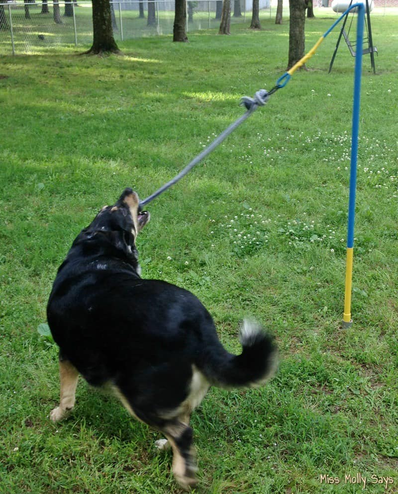 Tether Tug Dog Toy for Endless Hours of Play and Exercise!