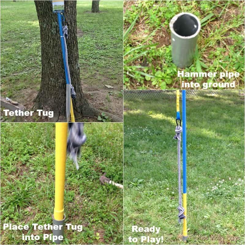 Tether Tug Dog Toy Installation
