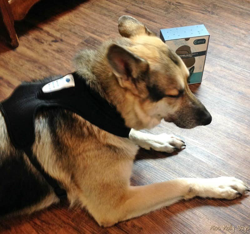 German Shepherd dog falling asleep with Calmz Anxiety Relief System