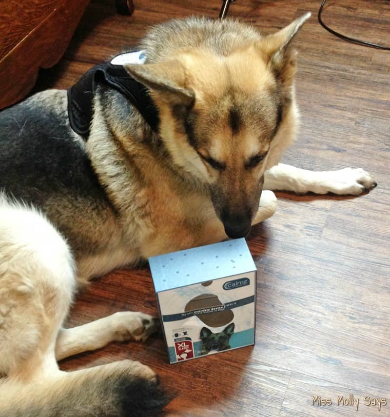 German Shepherd dog with Calmz Anxiety Relief System